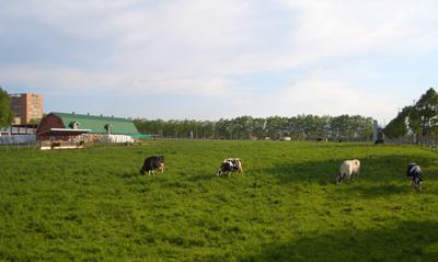 酪農��園大�� 牛