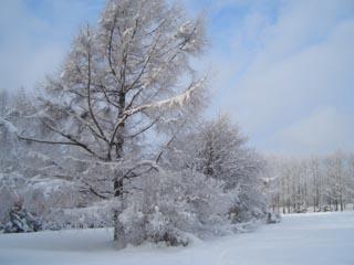 北海道 樹氷 ダイヤモンドダスト