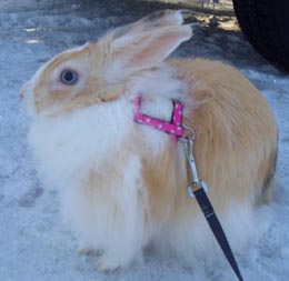 ピース ウサギ ステンドグラス