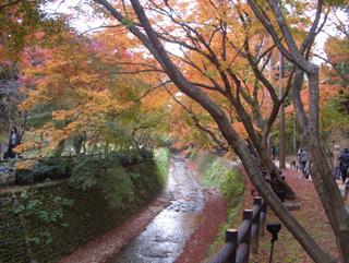 京都 北野天満宮 紅葉